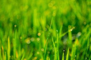 DPRTE sponsor Tetra Tech wins USACE environmental services contract